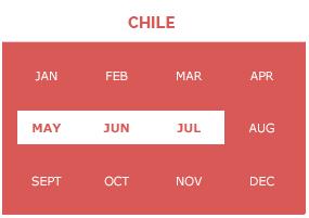 chile-p