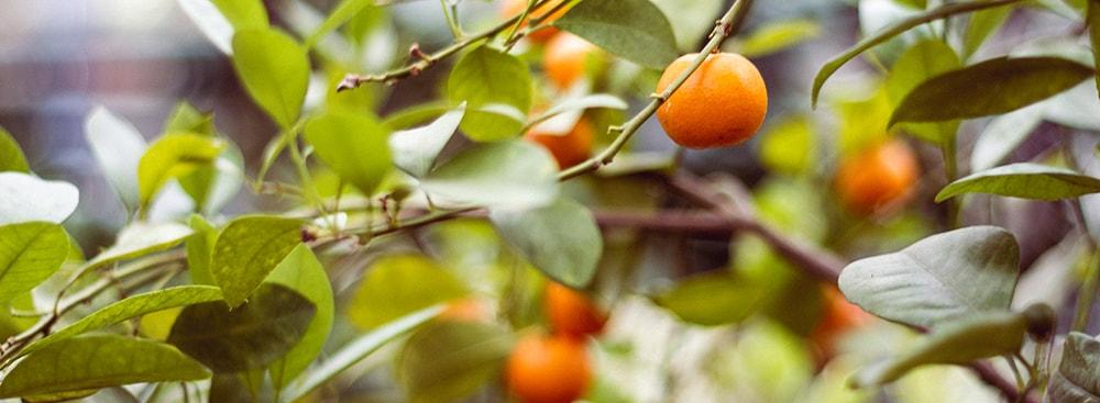 oranges-min 2