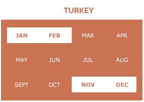 turkey-p